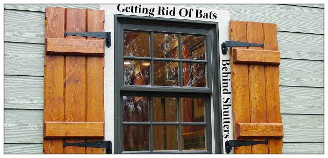 bats behind shutters